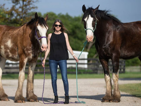 Meet the Wichita Police Department's new Clydesdales on Wednesday