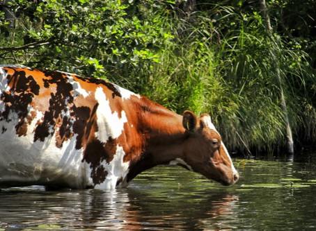 Hitzestress? Kräftigen und vitalisieren Sie die Tiere!