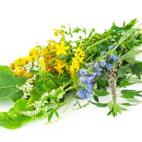 Kräuter & Heilpflanzen – nur etwas für alternative Spinner?