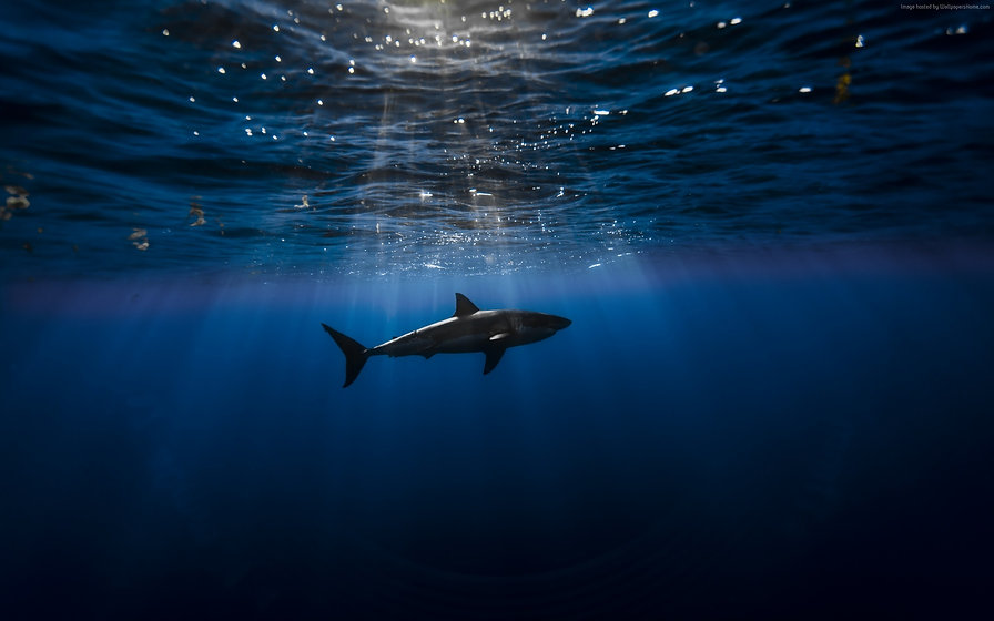 Shark_atlantic_ocean-Marine_life_HD_Wall