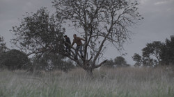 Dad on tree