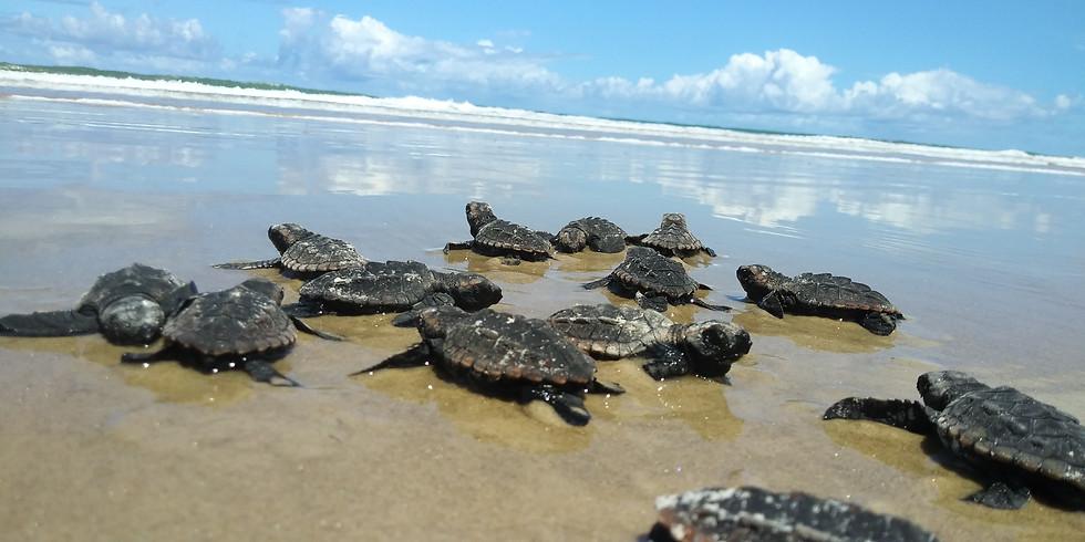 Dia Mundial da Tartaruga Marinha