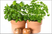 clay-pots-with-herbs.jpg