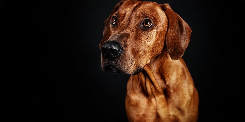 Studio-Tag für Hunde