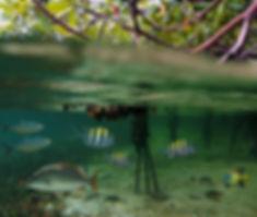 full-mangroves-damas-island-costa-rica.j