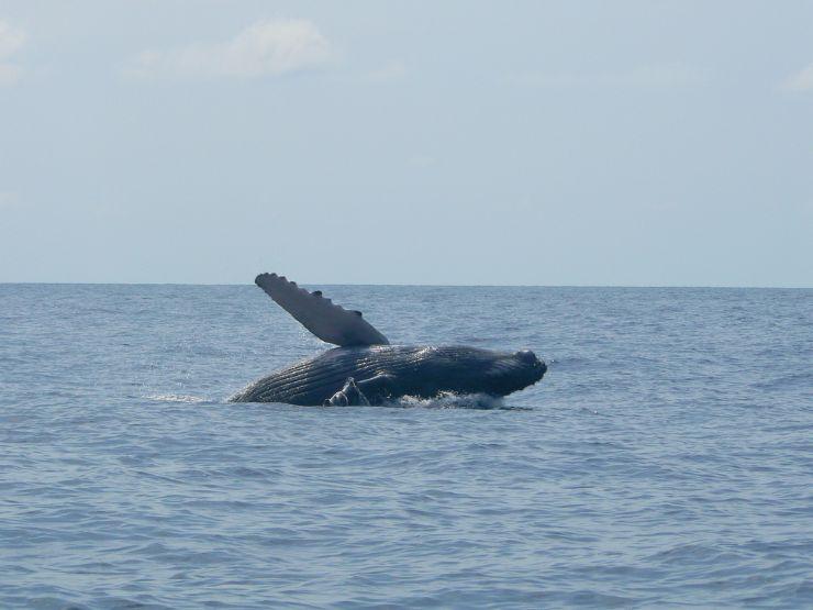 Whale Season Catamaran
