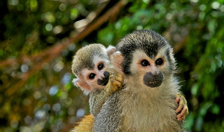 Manuel Antonio Experts Mangrove Monkey Tour