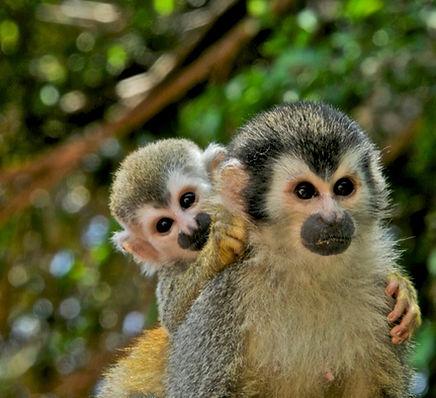 Jaco Rafting Mangrove monkeyland