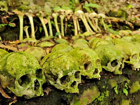 Pokopališče Trunyan z magičnim drevesom / Bali