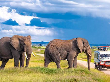 Kenija - potovanje kot FotoSAFARI