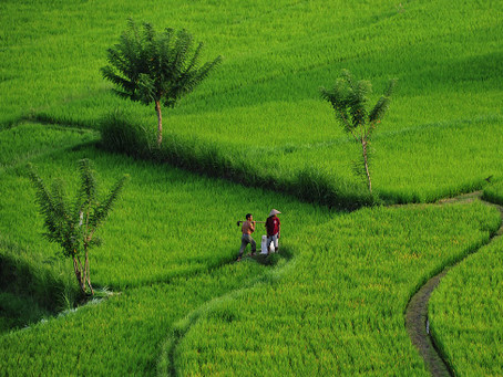 Bali FotoPOTEP - otok bogov, ljubezni in fotografije