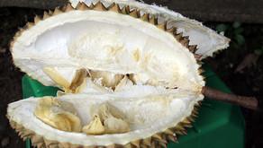 Durian - za nekatere naj sadež na svetu