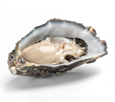 Southern Tasmanian oyster farmers rise above the devastation of a major disease outbreak