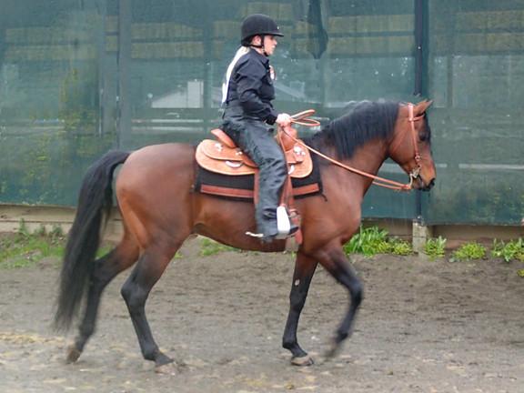 Pacific Rim Arabian Horse Show