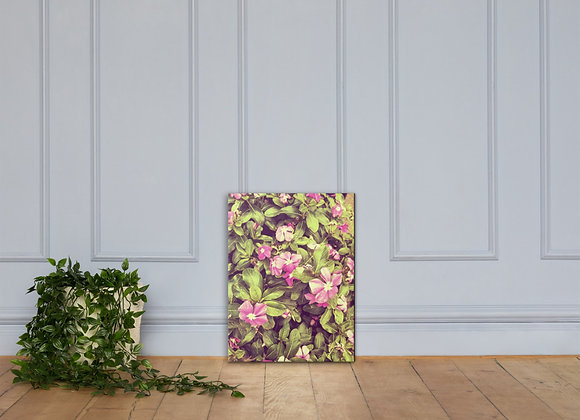 Catharansus Roseus on Canvas