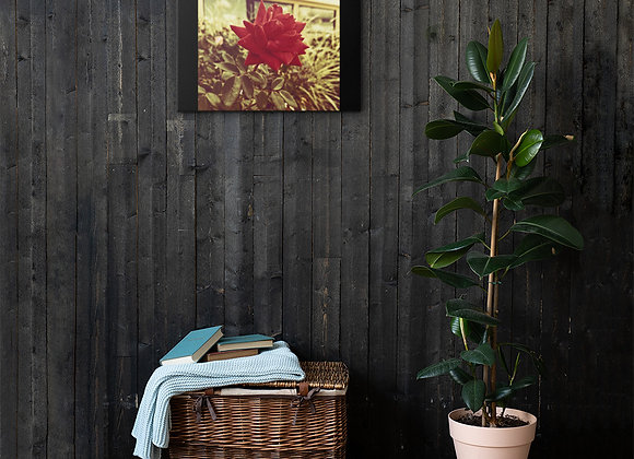 Late Bloom on Canvas
