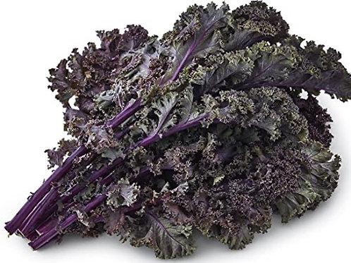 Kale - Purple - 1 bunch