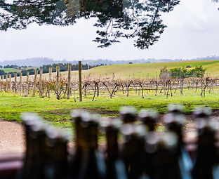 Overlooking the Vineyard at Hunter Gatherer Winery in the Macedon Ranges