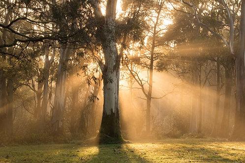 Sunrise at Sanatorium Lake Park