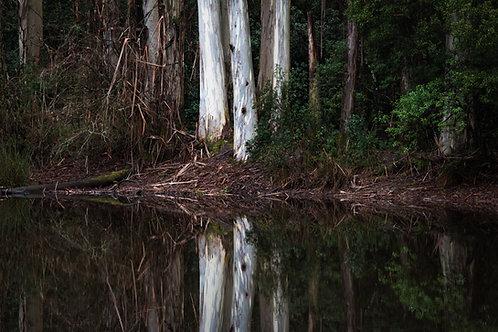 Sanatorium Lake Reflections