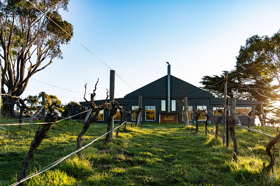 View through the vineyard to the outside of the Hunter Gatherer Winery Cellar Door