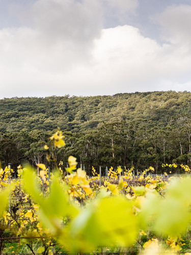 View of Mount Macedon from Mount Macedon Winery
