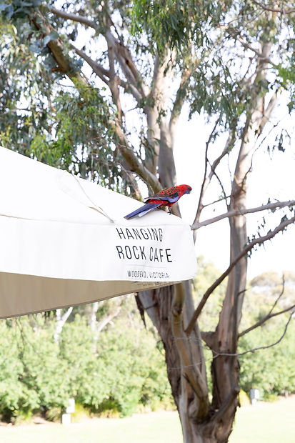 Wildlife surrounds the Hanging Rock Cafe, Woodend, Victoria
