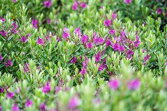 Native Australian Flowers that make you feel calm.