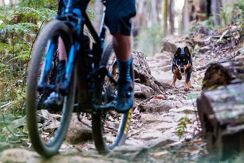 'Trail Pup' Fine Art Print