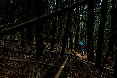 'Forest Ride' Fine Art Print