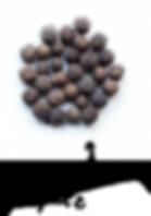Allspice-e1504333298211.png