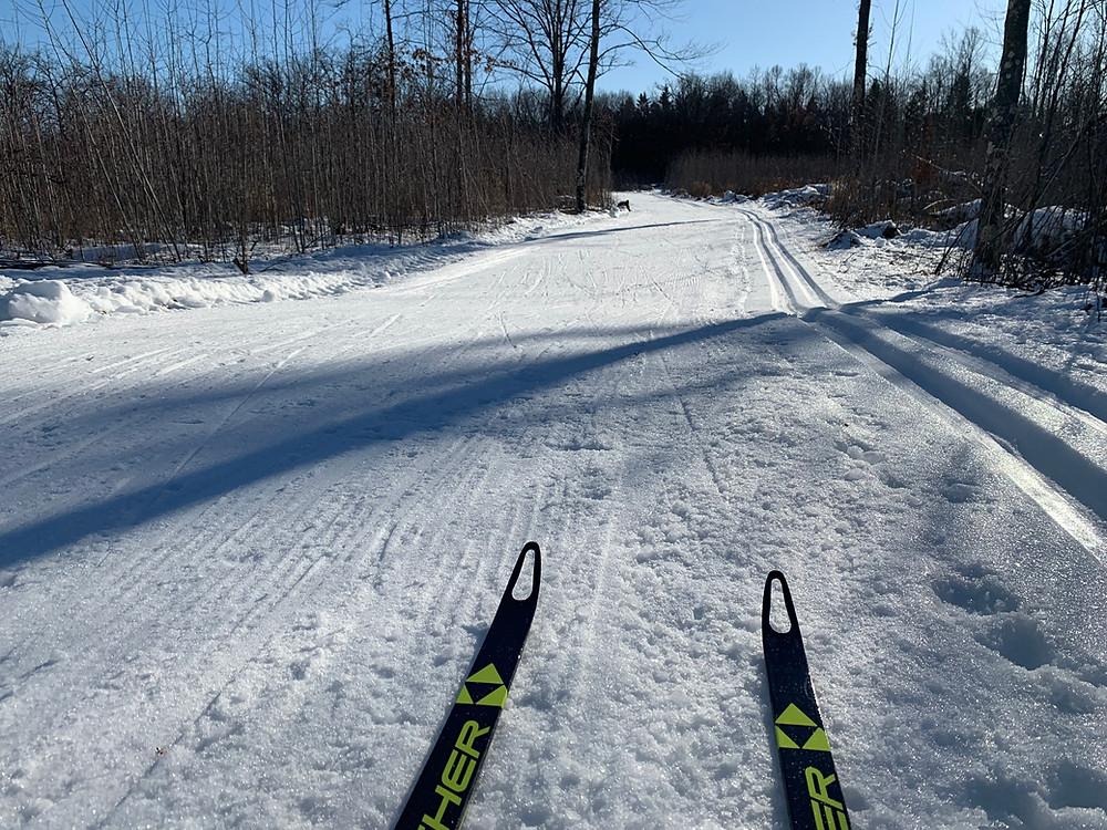 Vasaloppet Trail
