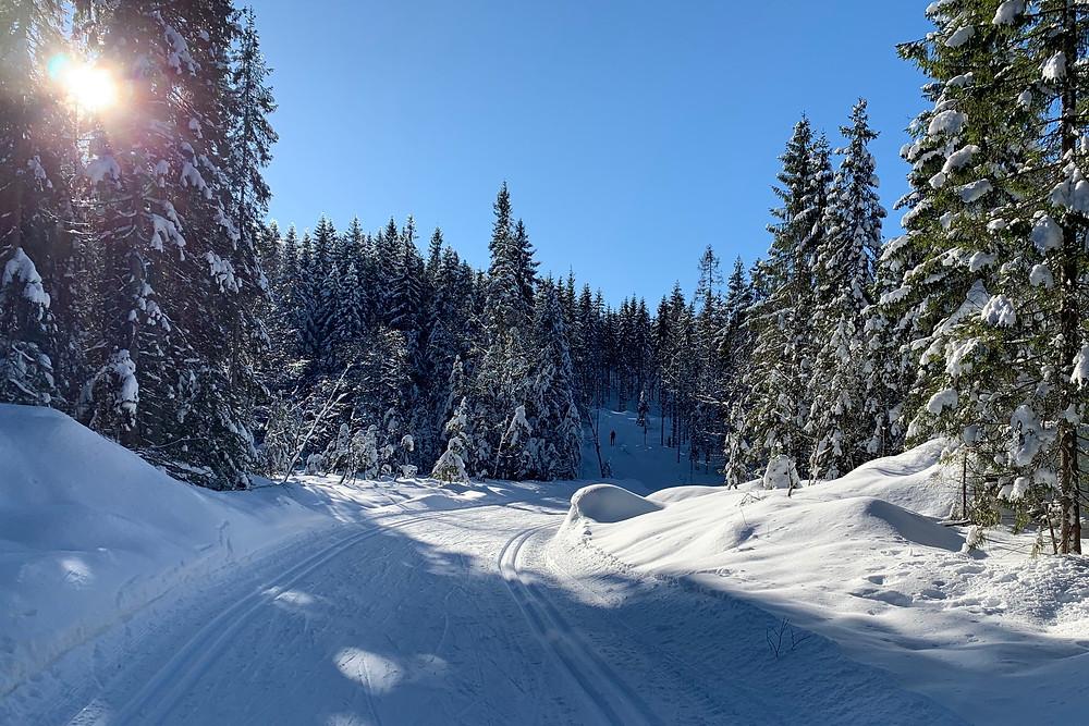 Cross country ski tracks through the Marka on the Sognsvann trail near Oslo, Norway.