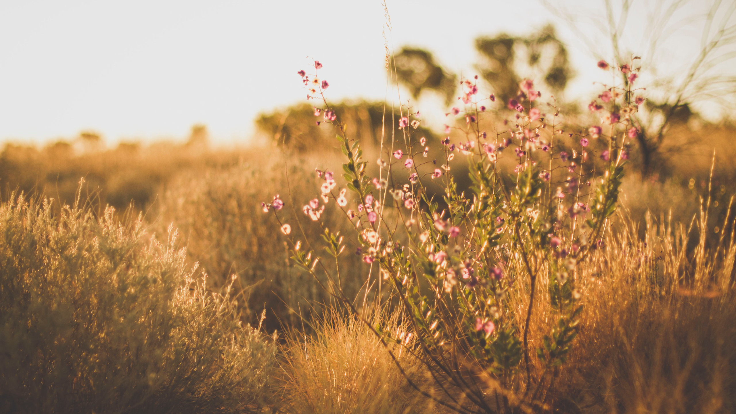 Beautiful wildflowers at golden hour