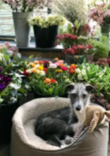 florist hertfordshire