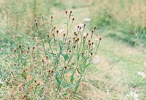 Fine Art Wedding Photography Wedding Photography Wild Flower Meadow