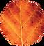 DOVERJAQUESWEB_knighton-logo leaf.png
