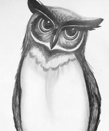 Owl Graphite.jpg