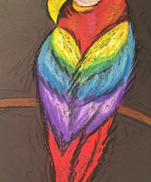 macaw chalk.PNG