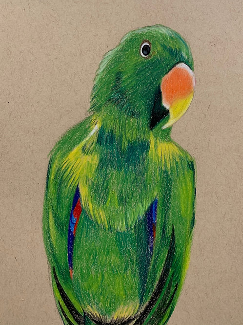 Online Parrot Drawing Course