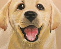 Dog Drawing.jpg