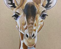 Giraffe Drawing.jpg