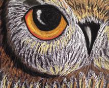 Chalk owl.JPG