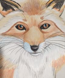 pencil fox.JPG