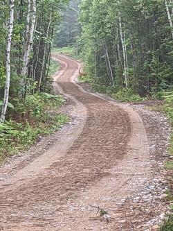 Camp Road - See the deer