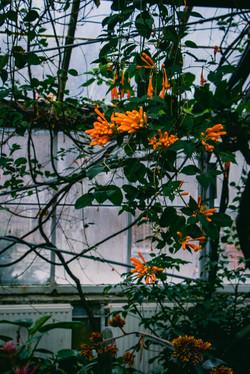 Bloom by Sarah Reese