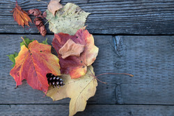 Leaves on a Bench by Angela Frangos