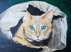 Cat's in the Bag by Sarah Stubbs