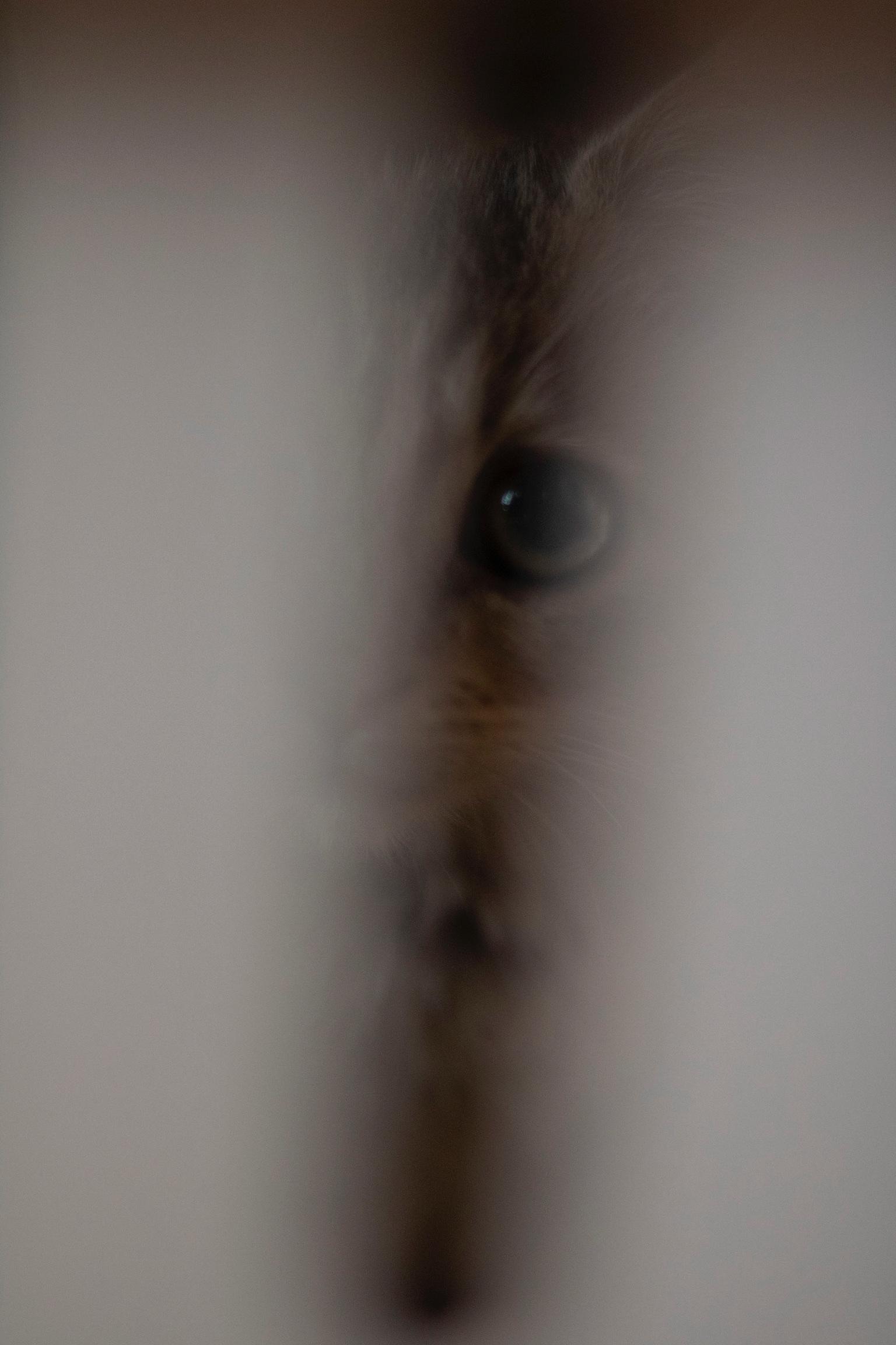 Eyes of my Angel - Heather Knight