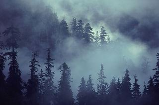 森のシーン